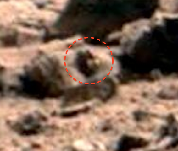 Alien Snail-like Creature On Mars And Other Martian Strangeness