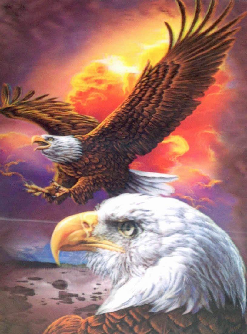 E-6 Eagle w/Sunset 3D Picture