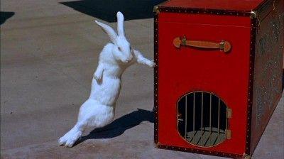 Jerry Lewis Movie Geisha Boy I Love The Rabbit Harry And Mr