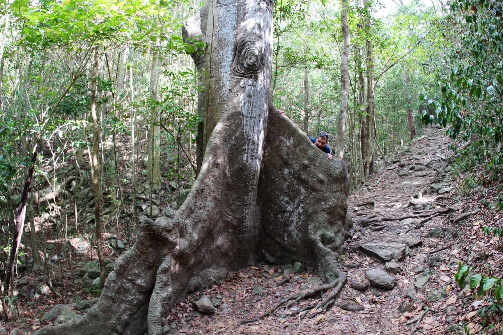 Virgin islands state tree