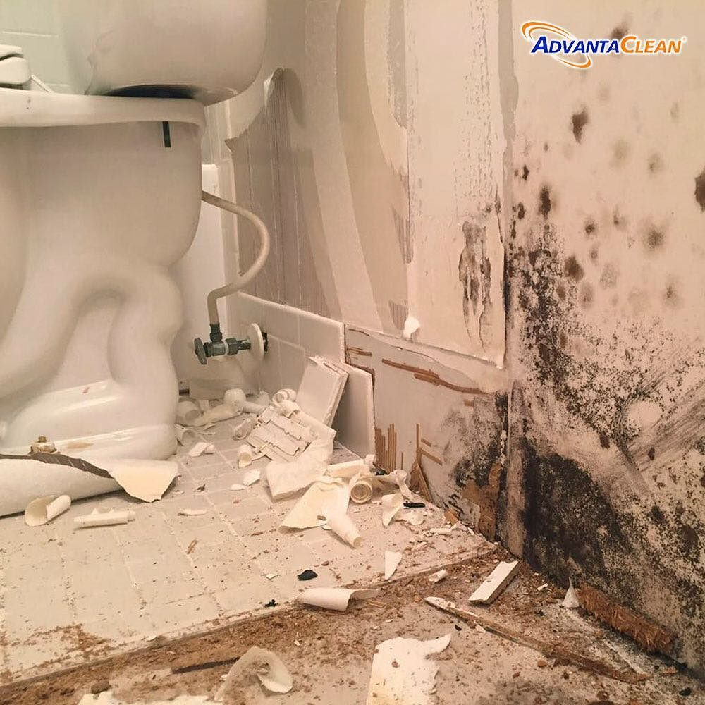 Dampness In Any Home Can Lead To Mold And Mildew Growth And In