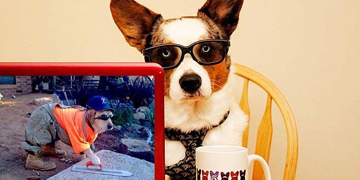 Cachorros de trabalho - Saiba tudo sobre os cachorros no cachorro.co