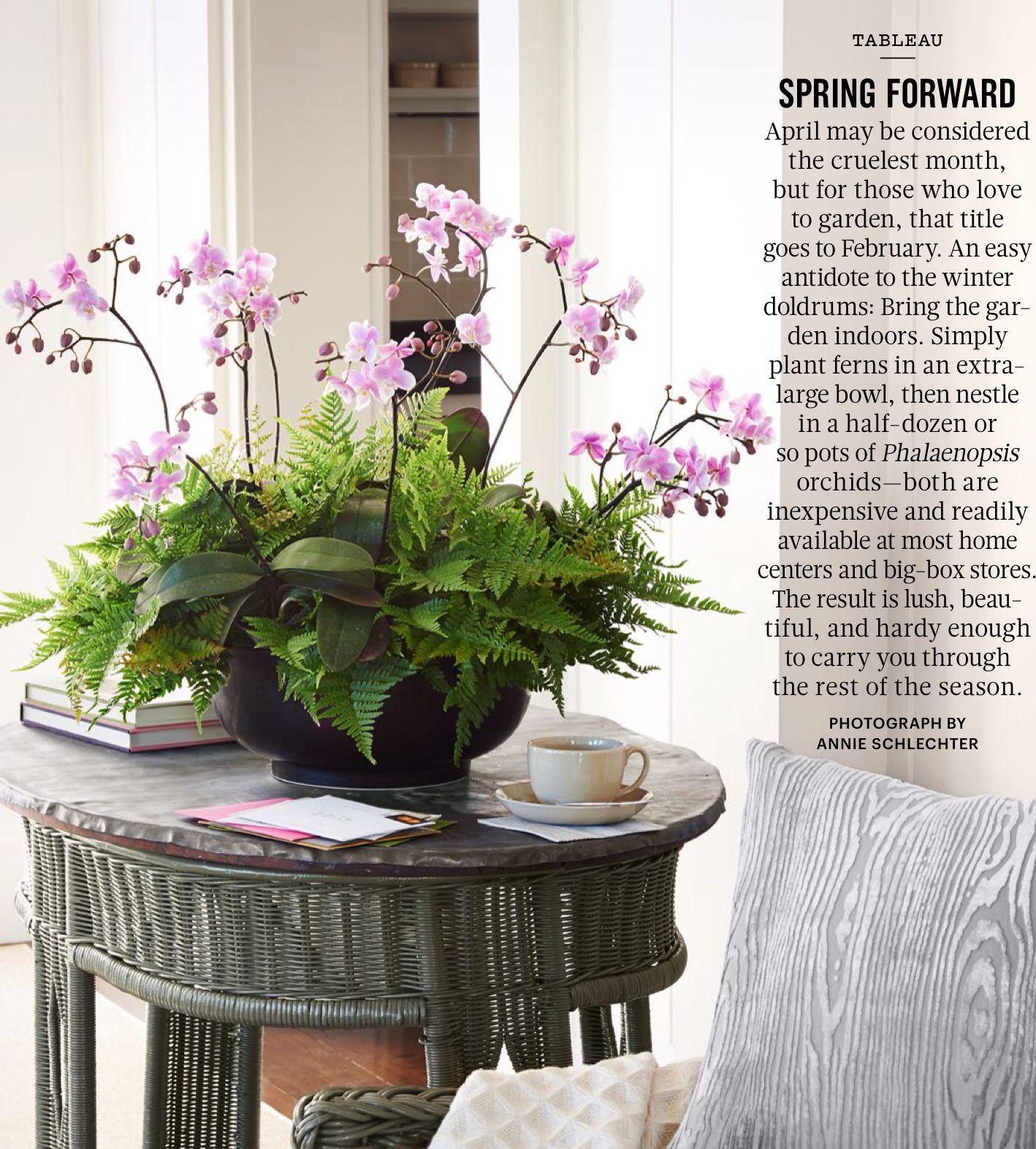 Houseplant Checkup | 胡蝶蘭 | 蘭花、ガーデニング、紫色