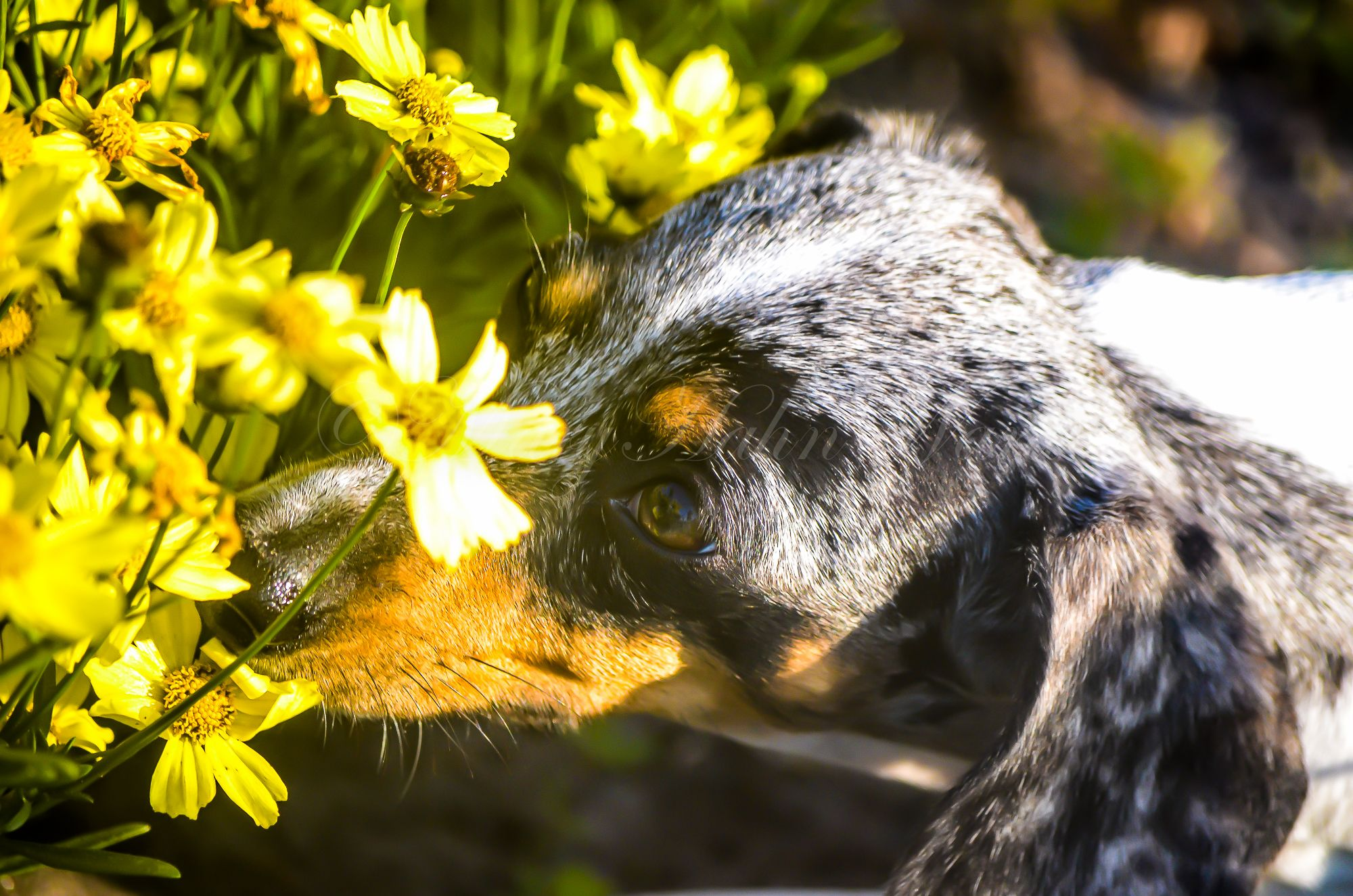 Takin' the time to smell the flowers
