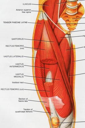 Iliotibial Band Muscle Group picture used from \