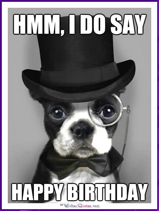 Funny Dog Birthday Meme: Hmm, I do say happy birthday.