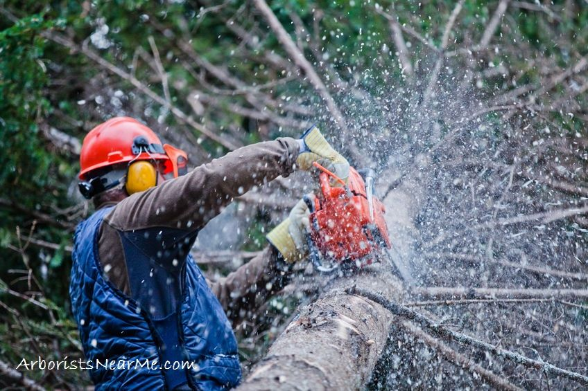 Best Tree Service in San Antonio TX Tree removal service