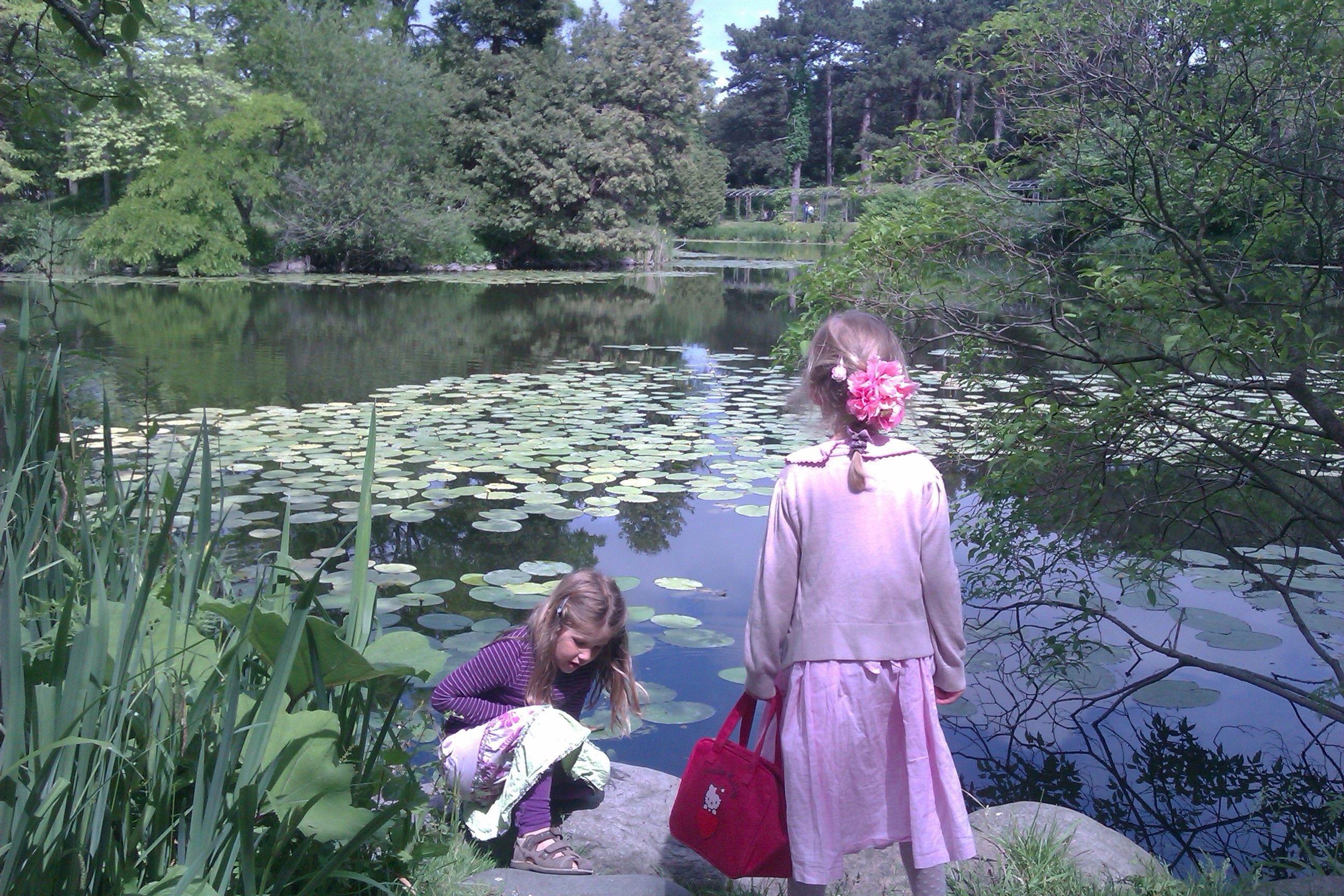 Botanisk Have. Udforsk planteliv, nyd søudsigt  og måske er du heldig at se skildpadder.