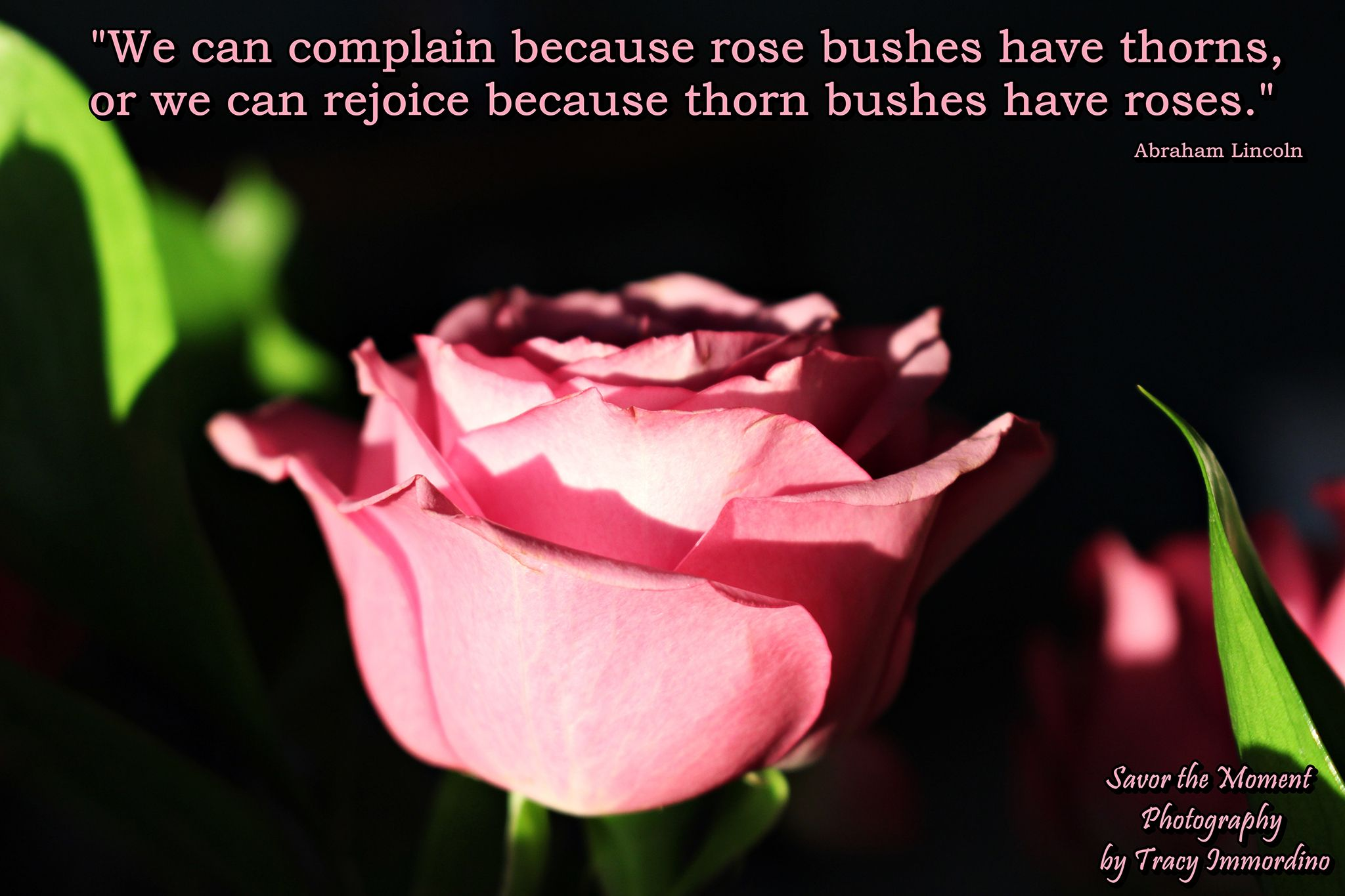 Pink Rose Quote Savor the Moment Photography by Tracy
