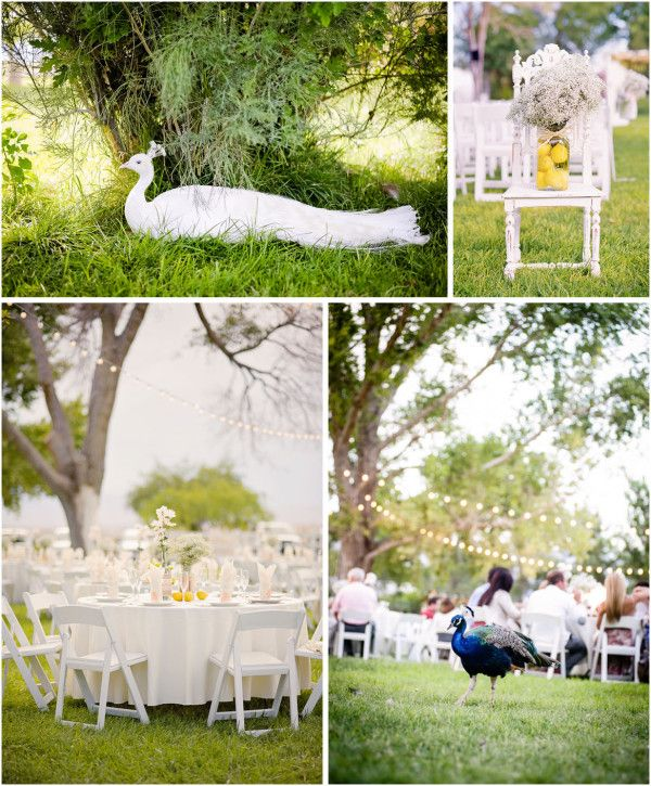 Outdoor Lighting Las Vegas: Rustic Wedding With Southern Style At Floyd Lamb Park At