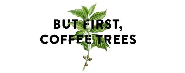 But first, coffee (trees)