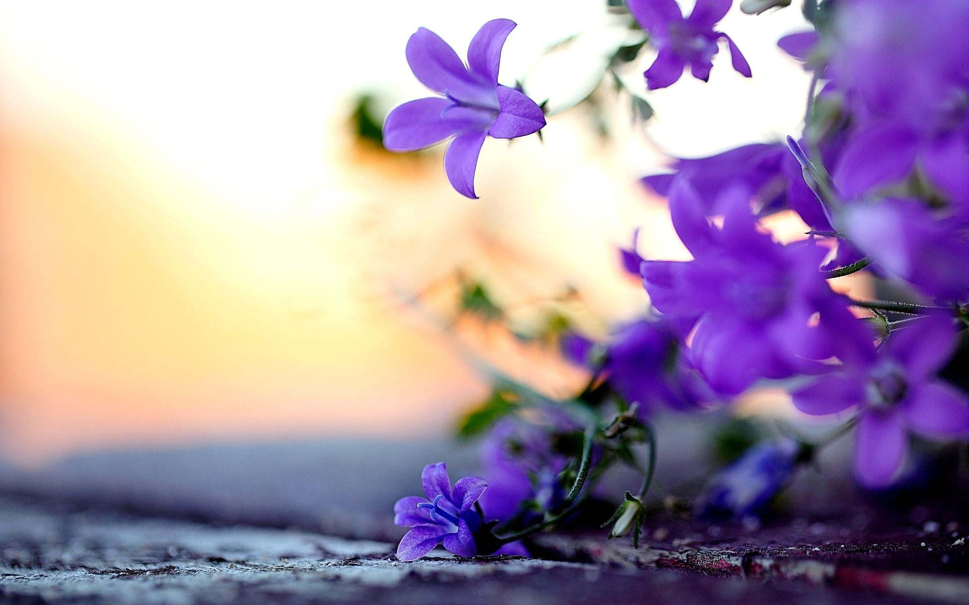 Flower Jasmine Pictures Google Search With Images Purple