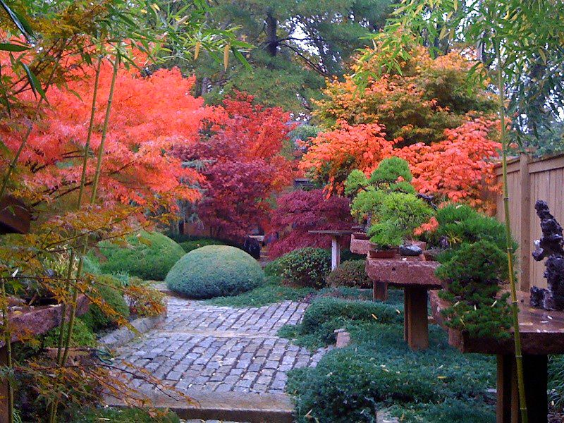 Love The Mix Of Different Colored Trees Maple Tree Landscape Japanese Garden Design Japanese Garden