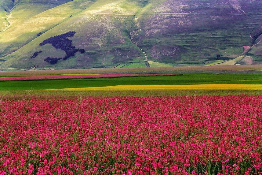 Castelluccio is a village in Umbria, in the Apennine Mountains of ...
