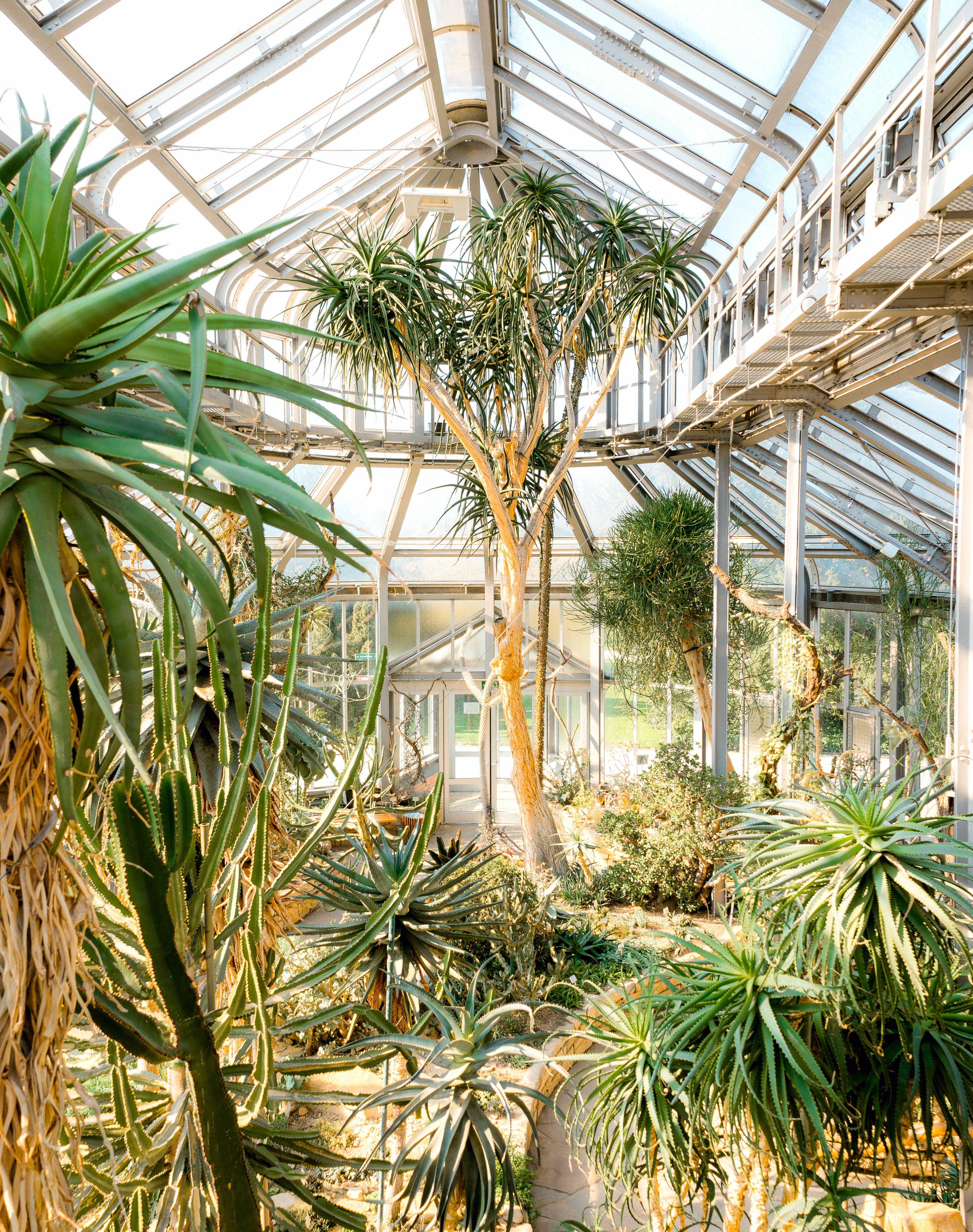 Botanical Garden In Berlin Botanical Gardens Botanical Nature Photography