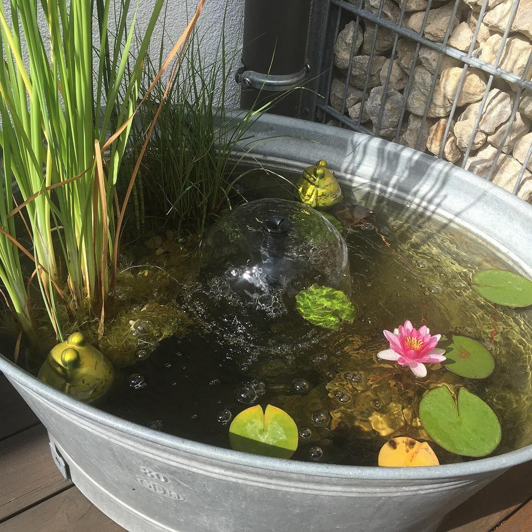 garten terrasse Sie haben auf Ihrem Balkon oder im Garten keinen Platz fr eingroes Wasserbecken Dann legen Sie in einem Kbel einfach einen dekorativen Miniteich an.