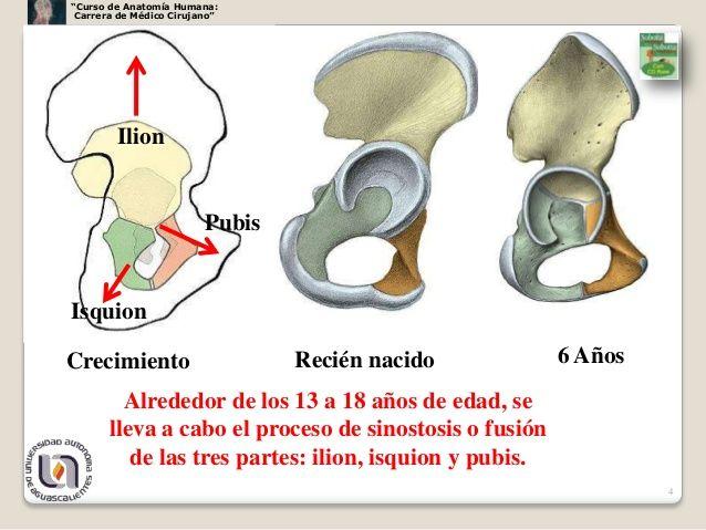 """Curso de Anatomía Humana: Carrera de Médico Cirujano"""" Ilion ..."""