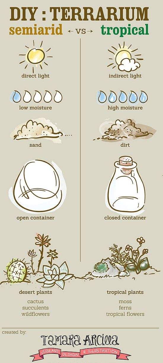 How To Make A Terrarium (Everything) In 11 Infographics | Balcony Garden Web
