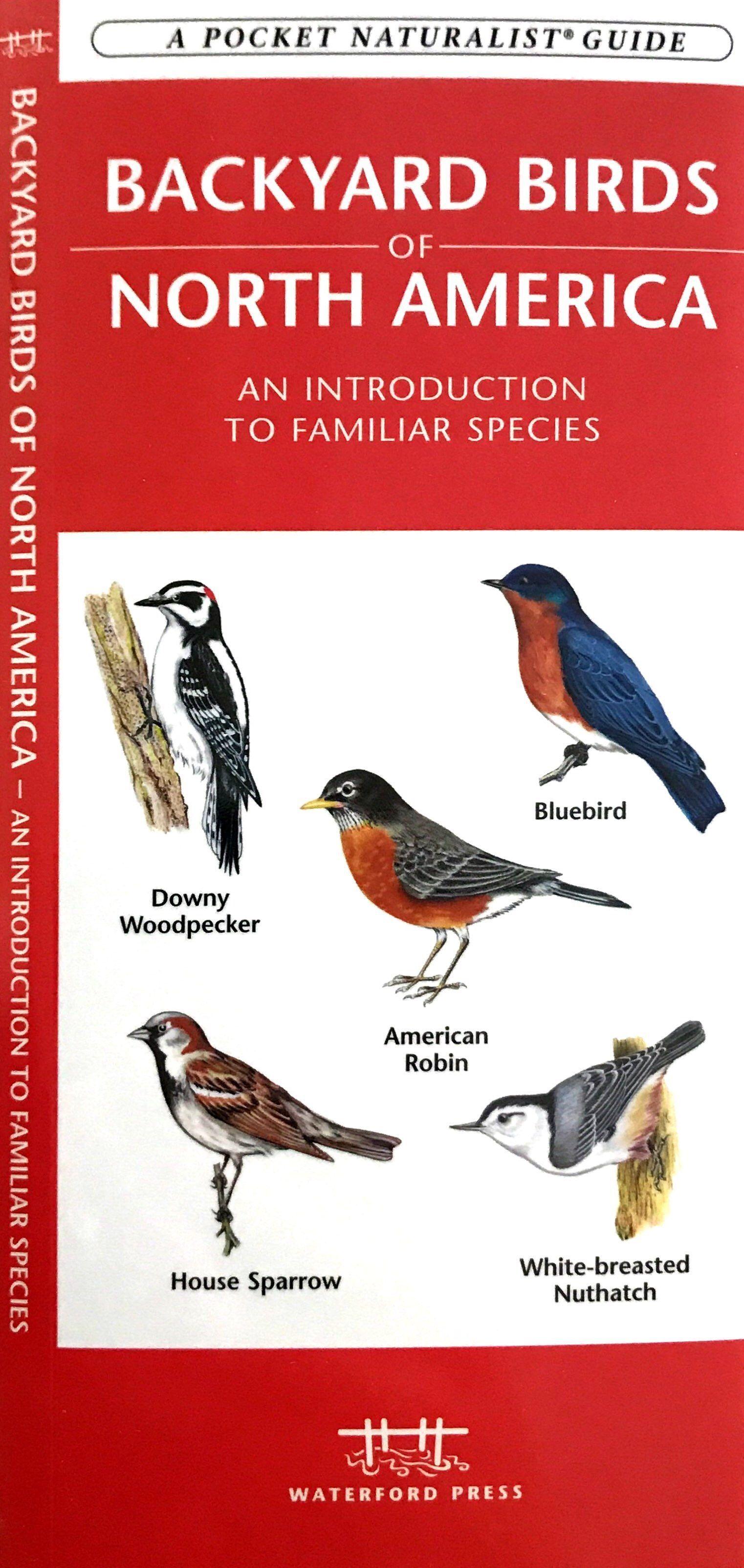 BACKYARD BIRDS OF NORTH AMERICA | Backyard birds, Backyard ...