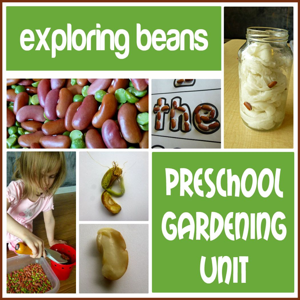 Preschool Gardening Unit Exploring Beans