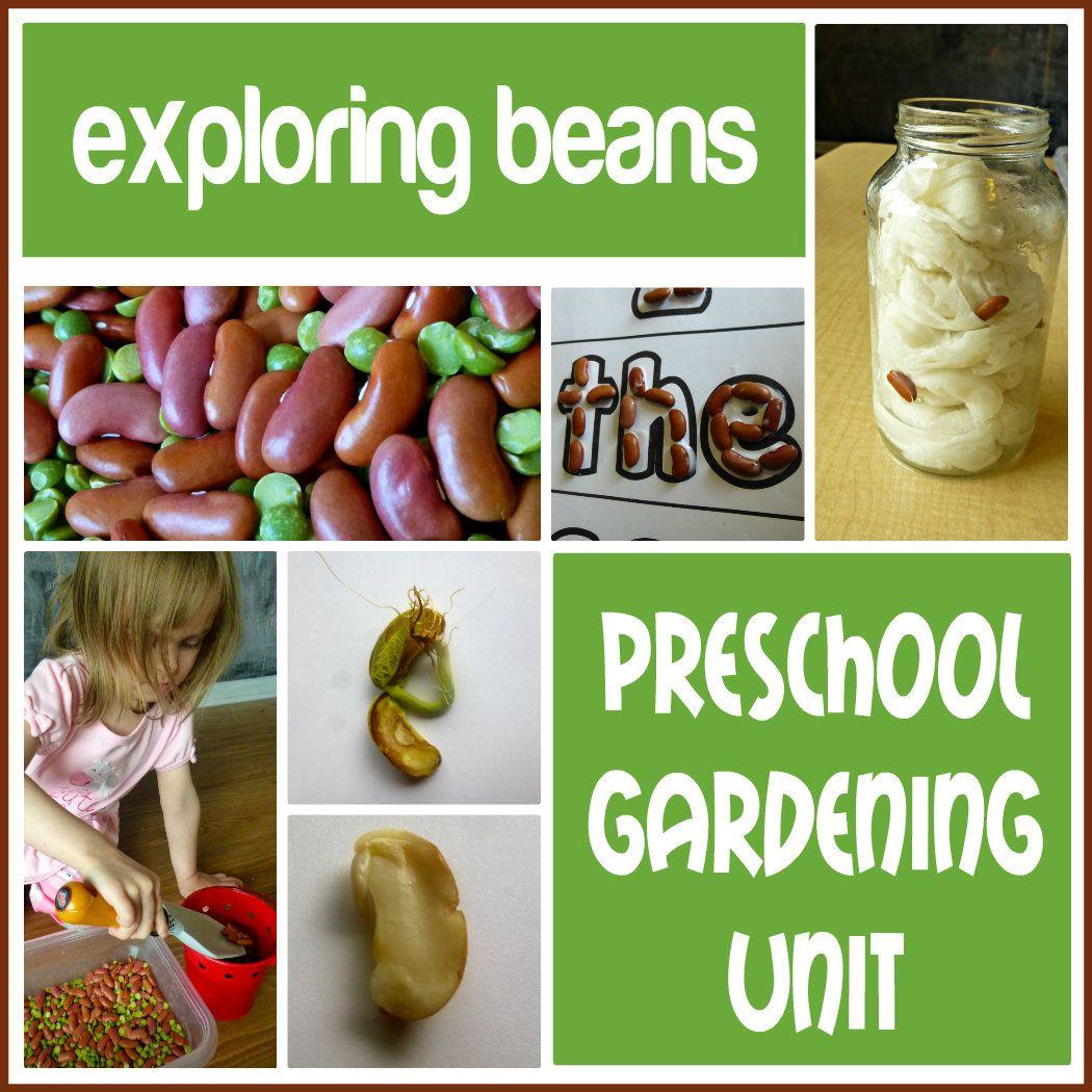 Preschool Gardening Unit Exploring Beans