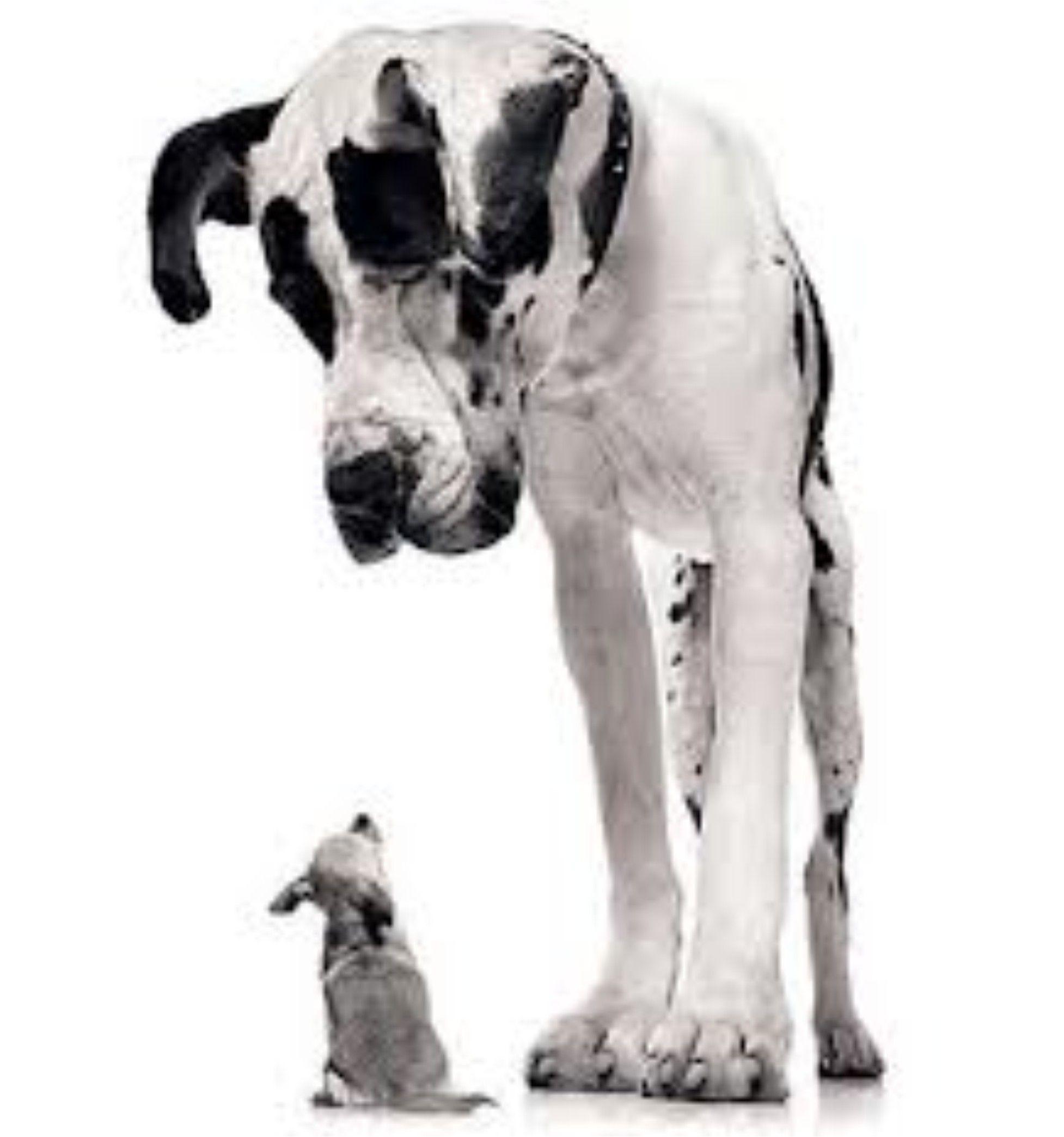 So Big So Small Animals Beautiful Big Dogs Animal Photography