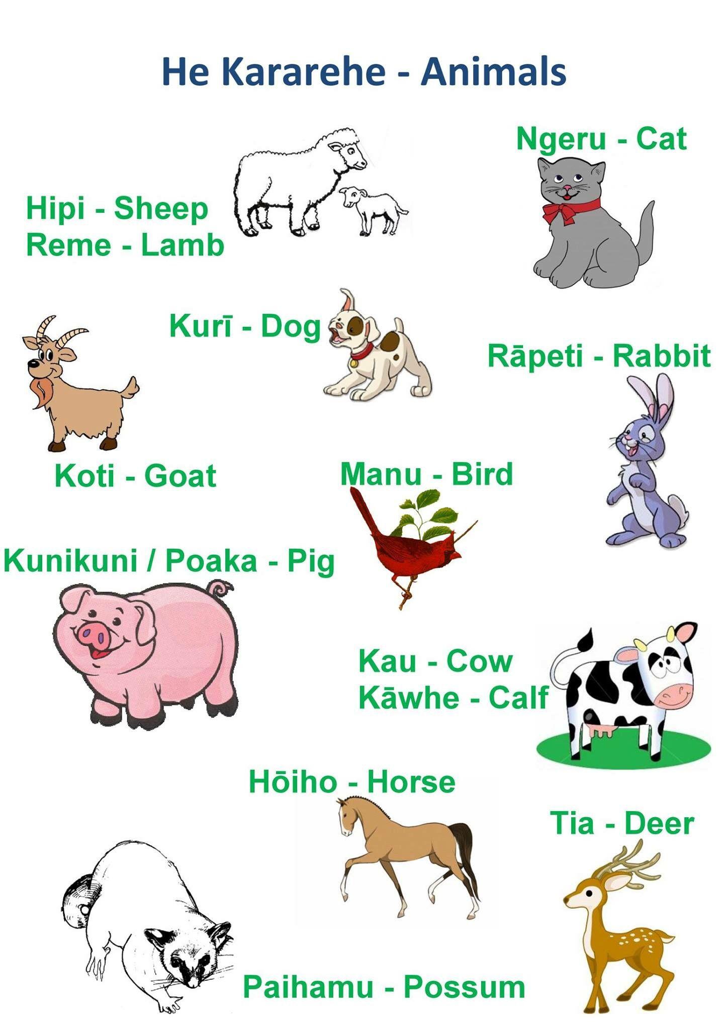 Animals Literacy Pinterest Maori Maori Words And Animals