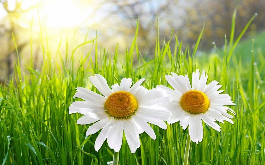 Resultado de imagem para flores silvestres