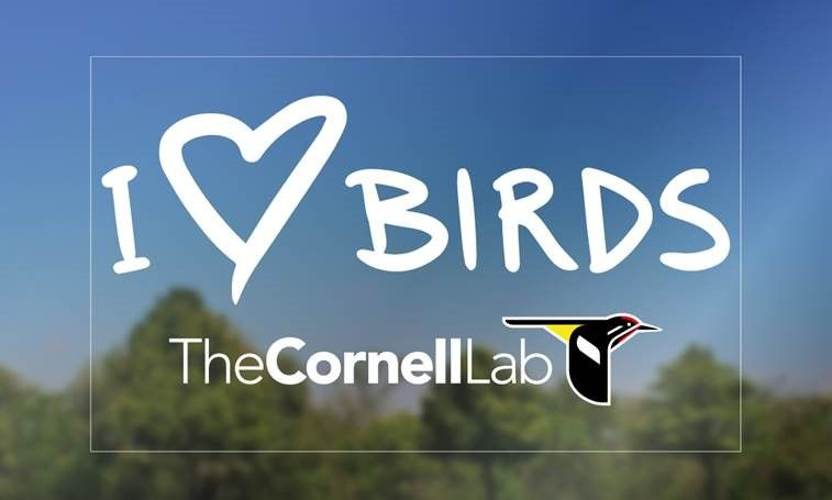 Receive A Free Decal From The Cornell Lab Of Ornithology - Window decals for birds canada