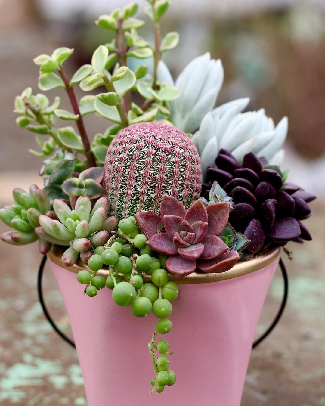 Succulents Vasos De Plantas Suculentas