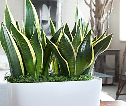low maintenance office plants. The 10 Most Low Maintenance Indoor Plants You Can Buy Office R
