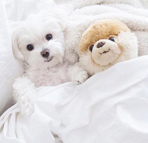 They Are Both Smiling Maltese Maltese Dogs Maltese Puppy Dogs