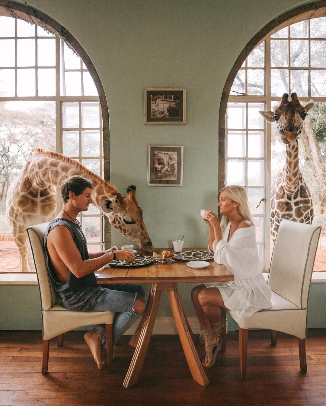 "161k Likes, 4,111 Comments - JACK MORRIS (@doyoutravel) on Instagram: ""Took my girl @gypsea_lust for a birthday breakfast with a couple of our giraffe friends  happy…"""