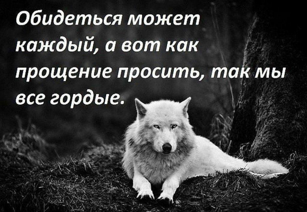 только картинки с фразами со волки смыслом о жизни и любви эфир