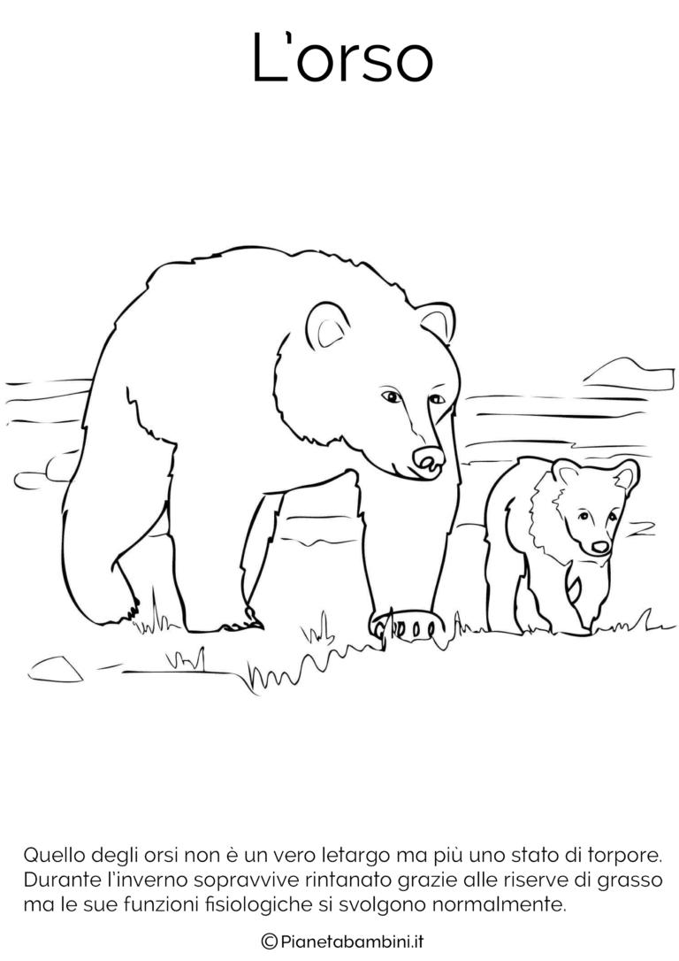 Disegni Di Animali Che Vanno In Letargo Da Colorare Scienze