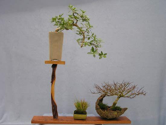 Dasu Bonsai Studios Shohin Bonsai Display Stand S Bonsai Art Bonsai Mame Bonsai