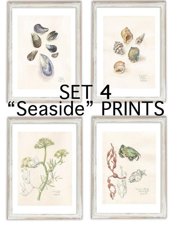 SET 4 seaside PRINTS - Pencil & Watercolor drawings - Coast seashells, mussels, crabs, maritime plants still life by Catalina.