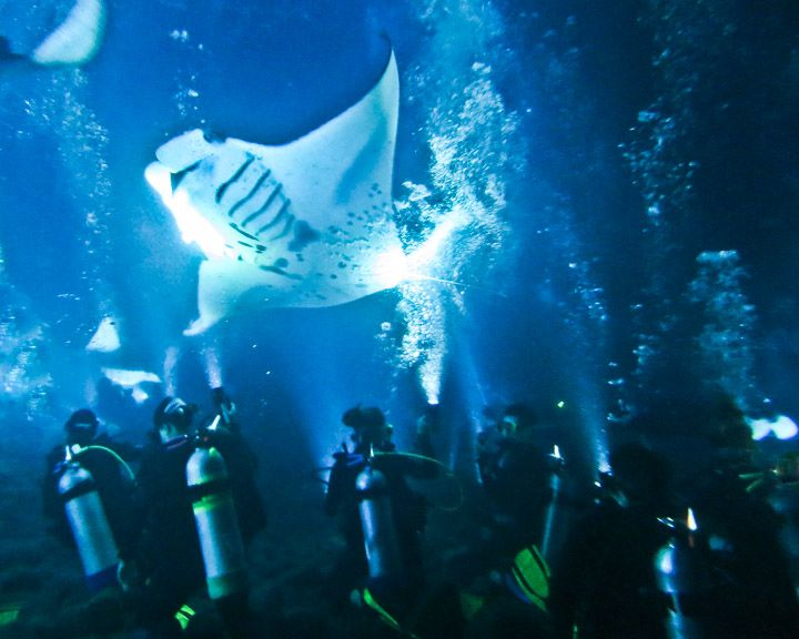 Kona Diving Company Night Dive To See Manta Rays Feeding Must Do