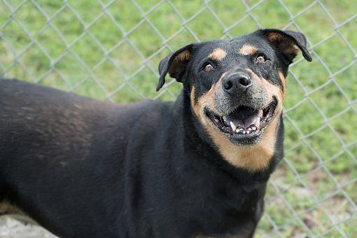 Pictures of Patria a Labrador Retriever for adoption in Key Biscayne, FL who needs a loving home.