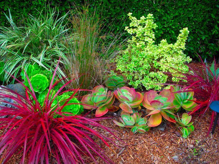 native and drought tolerant