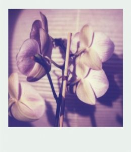 A cute polaroid looking lamp :)