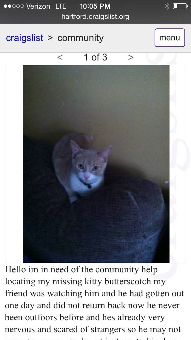 Https Www Facebook Com Ct Lost Pets Posts 773965742725303 Ct Lost Pets Page Liked 4 Mins Missing In New Britain Tabby Losing A Pet Lost Cat Police Canine