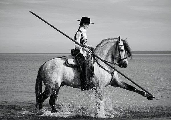 p r e horse and rider equus horses andalusian horse y beautiful horses. Black Bedroom Furniture Sets. Home Design Ideas