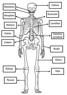 Huesos.jpg (1131×1600)   angel   Pinterest