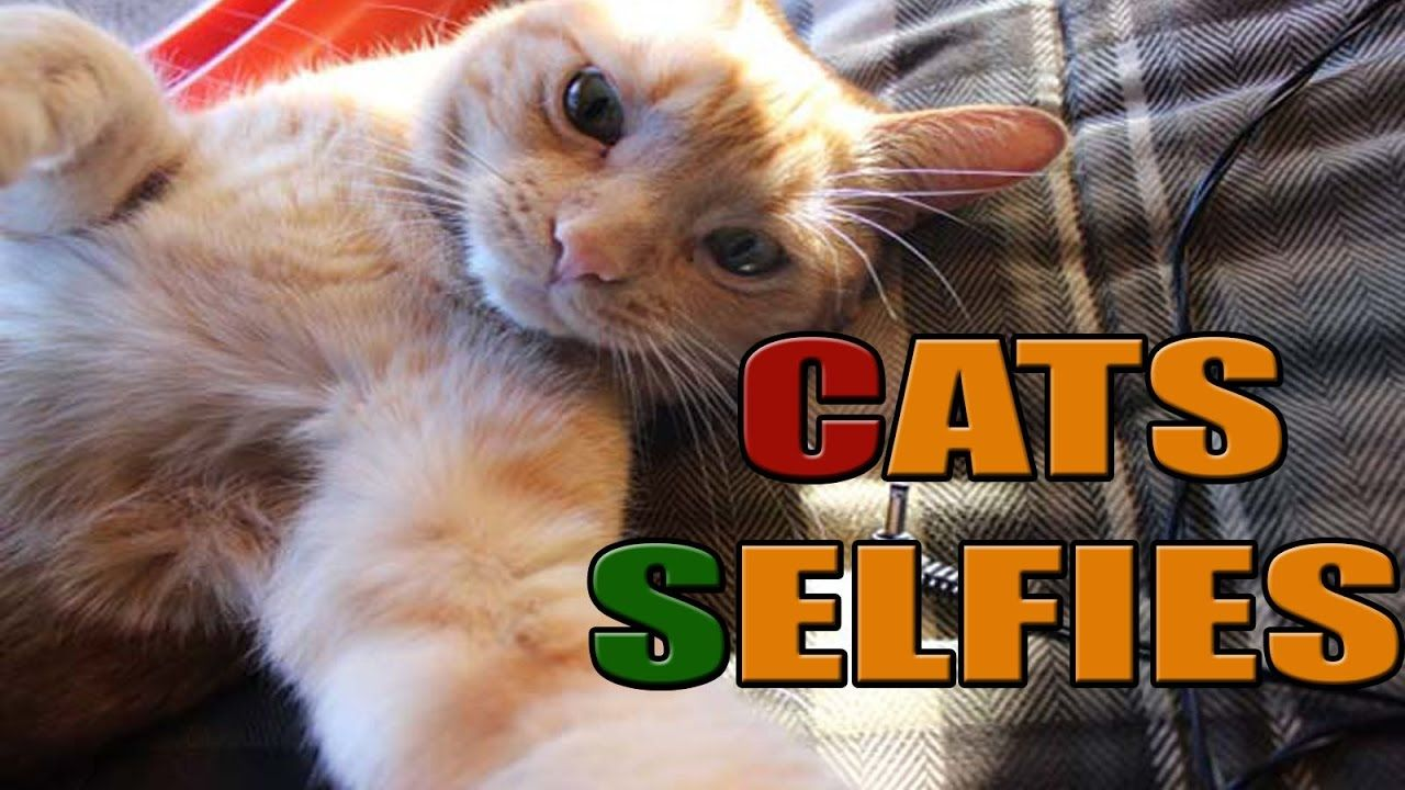 17 Most Awesome Funny Cats Love To Take Their Selfies