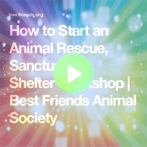 to Start and Run an Animal Sanctuary  One Day  How to Start and Run an Animal Sanctuary  One Day How to Start and Run an Animal Sanctuary  One Day  How to Start and Run a...