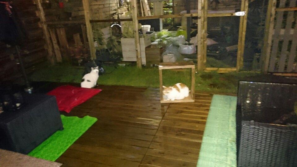 Catspace