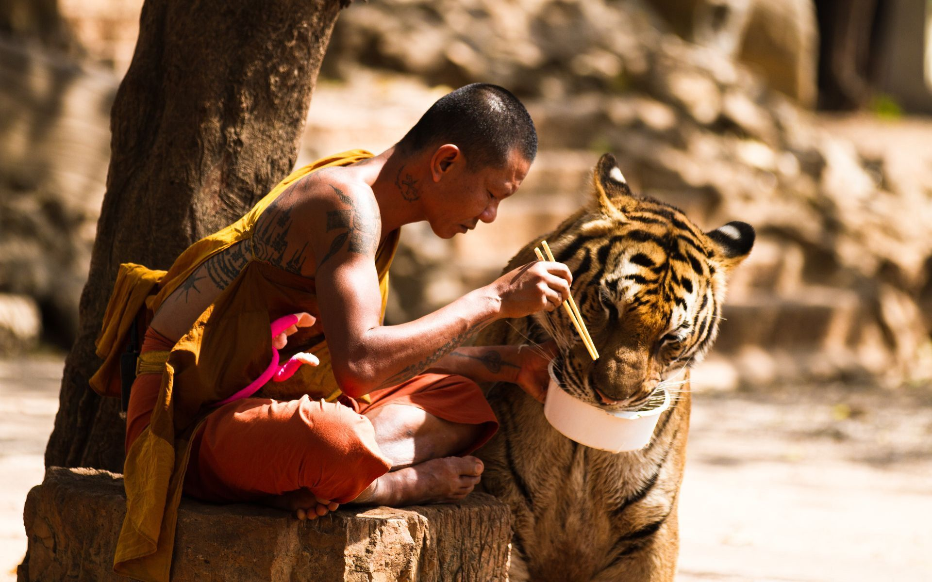 The monk and tiger