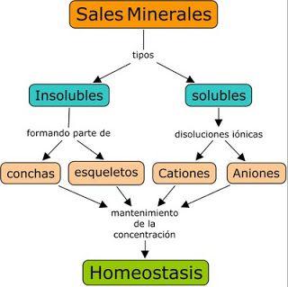 BIOMOLÉCULAS INORGANICAS: AGUA Y SALES MINERALES. (con..