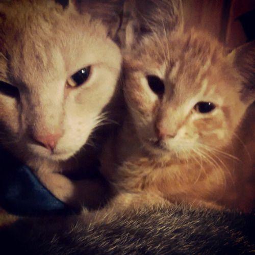 Pumpkin & Louie by _lizard__queen http://ift.tt/1JZaKmC